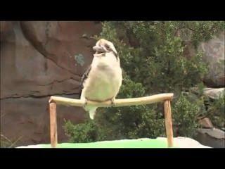 Mira Cómo Canta El Pájaro